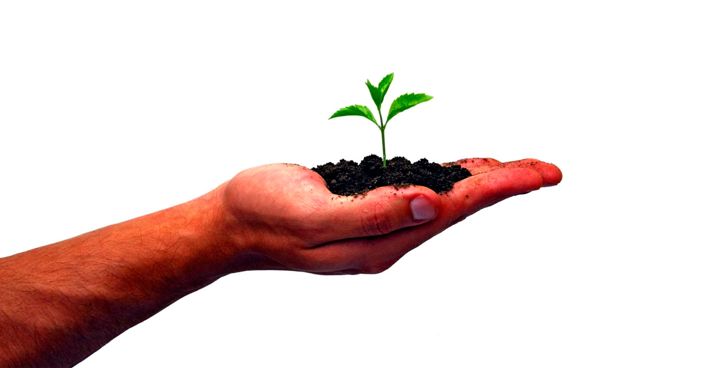 Glenkirk Planned Giving - Plant growing in hand